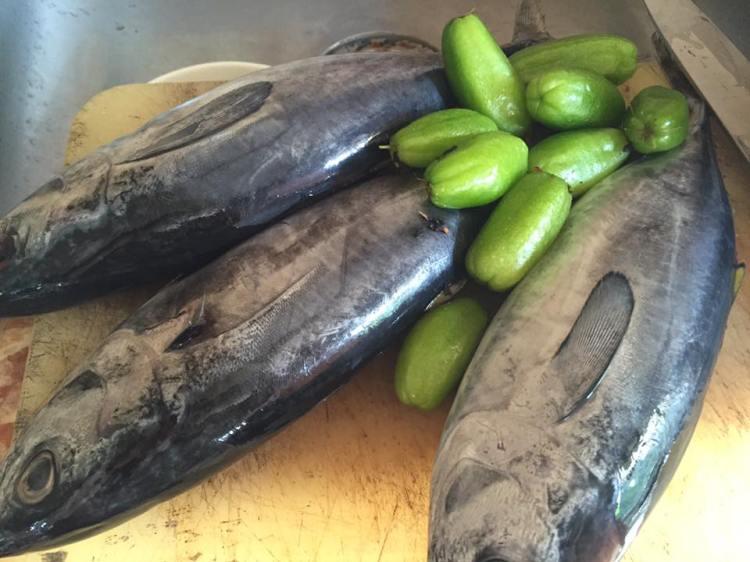 Fresh Tulingan (Panit in Ilonggo)